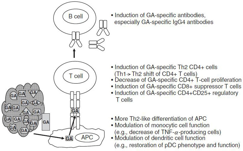 Figure 2 : Glatiramer acetate modulates innate and