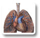 Pulmonology and Respiratory Research